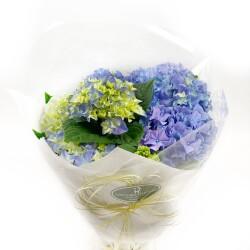 Hortensia blå