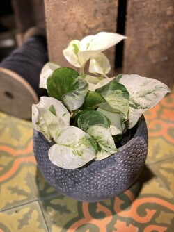 Grønn plante 04