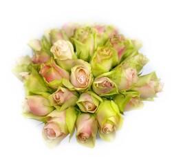 La Belle roser